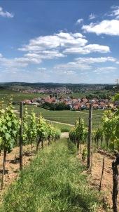 Alemania viñedos